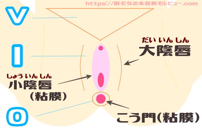VIOの粘膜付近は脱毛NG